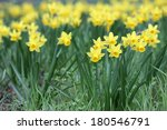 Details Of A Group Of Spring...