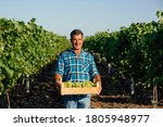 Small photo of vineyard farmer harvesting grapes in vineyard during wine harvest season in autumn. The harvesting. Farm winery. Grape Picking. man winemaker and vineyard owner. Family small business. Rural lifestyle