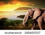 Elephant On Savanna Landscape...