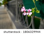 Small photo of Purple flowers on a black blurred background. Antagonism concept