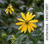A Selective Focus On Yellow...
