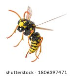Paper Wasp 3d Illustration On...
