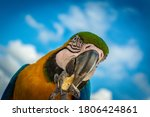 Yellow  Blue And Green Macaw...
