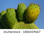 Close Up Of Green Prickly Pears ...