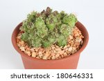 close up hamatocactus...   Shutterstock . vector #180646331