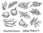 spice sketch. herb and spice...   Shutterstock .eps vector #1806798577