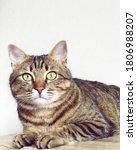 Portrait Of Beautiful Cat. Cut...