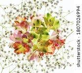 Alstroemeria Flower With...