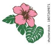 vector illustration of hibiscus ...   Shutterstock .eps vector #1807269871