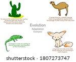 evolution  adaptation examples. ... | Shutterstock .eps vector #1807273747