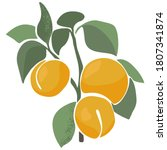 vector juicy apricot on a...   Shutterstock .eps vector #1807341874