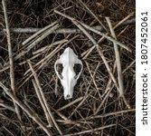 Animal Skull On Natural Forest...