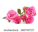 Stock photo pink rose flower bouquet isolated on white background cutout 180745727