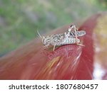 The Grasshopper Sitting On The...