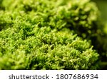 Fresh Green Moss On A Stone In...