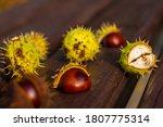 Horse Chestnut Buckeye Conker...