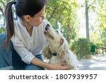 Elderly Dog Spaniel With Owner...