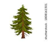 evergreen coniferous fir tree... | Shutterstock .eps vector #1808161501