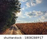 [22 AUG 2020 ; Durankulak, Bulgaria] Road with trees on one side and cornfield on the other