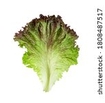 Red Coral Lettuce Isolated On...