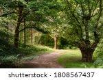 Stunning Forest Landscape Image ...
