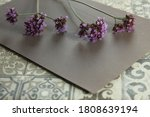 Bunch Of Verbena Flowers On Th...
