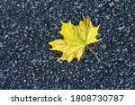 Yellow Autumn Maple Leaf On We...