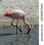 Beautiful Pink Flamingo. Lagun...