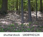 Light Flooded Undergrowth Of A...