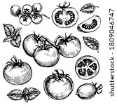 tomato and basil engraving ... | Shutterstock .eps vector #1809046747