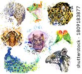 Tropical Animals Set. African...