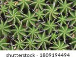 Striking Symmetry Of A Clump O...