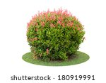 colorful shrub of short pigeon... | Shutterstock . vector #180919991
