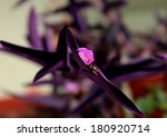 purple flower | Shutterstock . vector #180920714