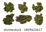 Set Of Moss Or Mosses On A Pine ...