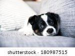 Tiny White And Black Cute Pupp...