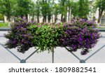 Outdoor Flower Pots With White ...