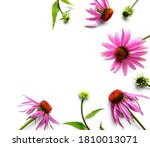 Echinacea Flower Isolated On A...