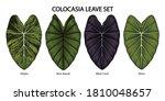 vintage vector botanical... | Shutterstock .eps vector #1810048657