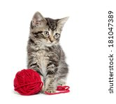 Stock photo cute baby american shorthair tabby kitten with red yarn on white background 181047389