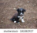 puppy | Shutterstock . vector #181082927