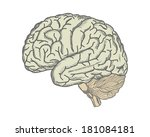 brain. hand drawing. vector.   | Shutterstock .eps vector #181084181