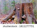 Bracket And Crust Fungi ...