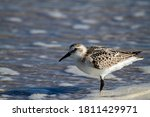 Close Up Isolated Image Of A...