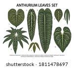 vintage vector botanical... | Shutterstock .eps vector #1811478697