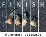 snail run near the finish line | Shutterstock . vector #181152611