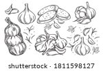 garlic outline drawn monochrome ... | Shutterstock .eps vector #1811598127