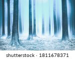 Forest With Snow In Winter