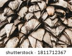 Palm Tree Trunk Texture Close...