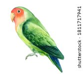 Tropical bird parrot lovebirds on a white background, watercolor illustration